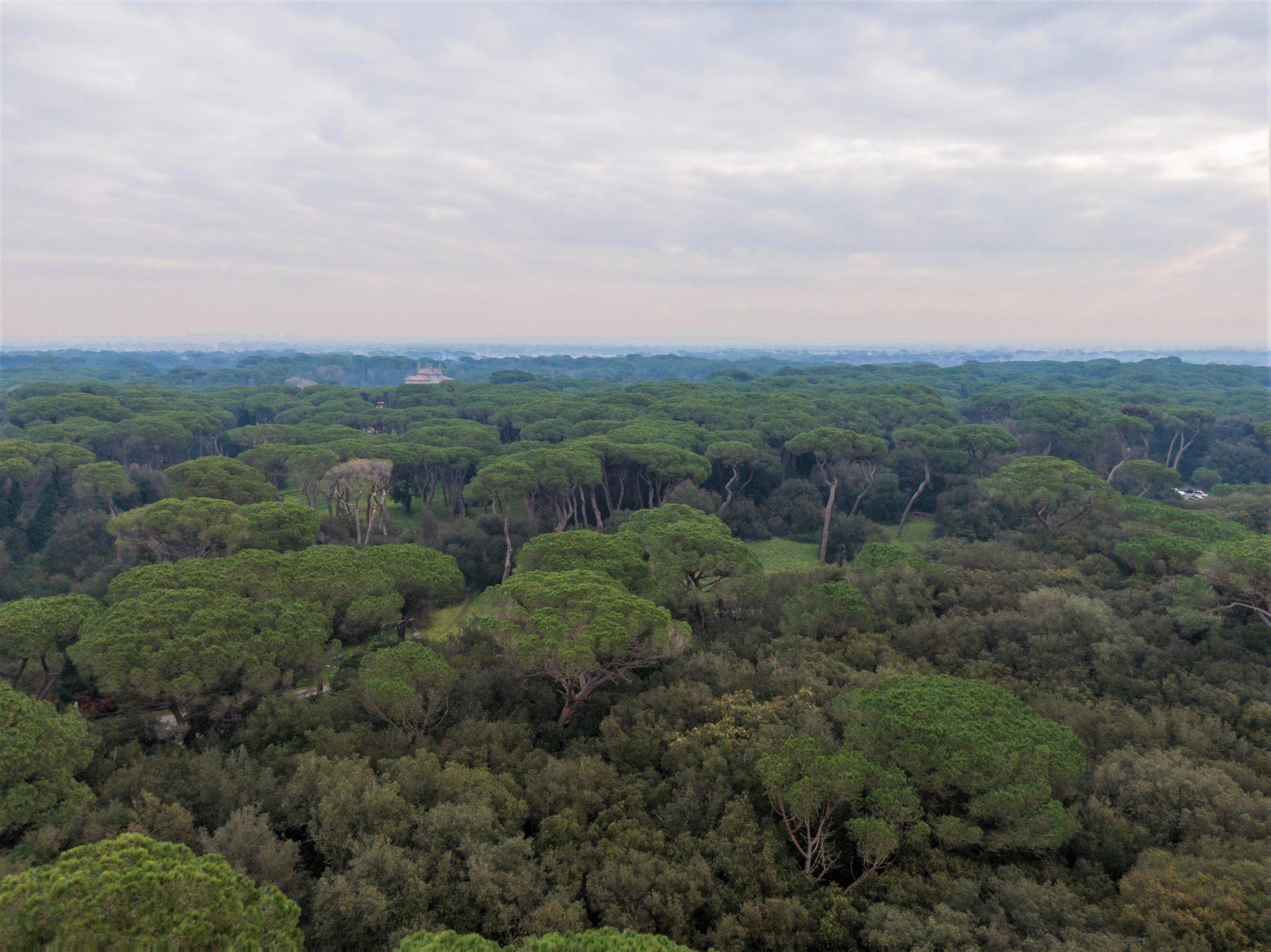 Pineta di Castel Fusano - polmone verde di Romave